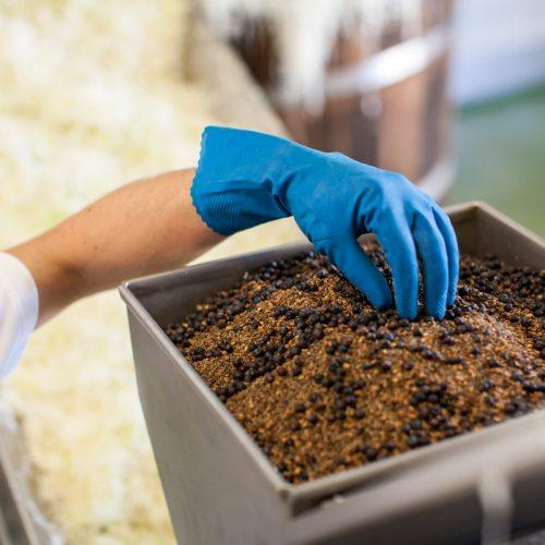 Sauerkraut-Produktionsprozess-wuerzen
